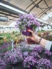 Обрезанный образ женщины с красивыми цветущими цветами в фиолетовом горшке на рынке — стоковое фото