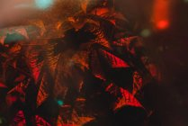 Яскравий спалах сонячного світла, що висвітлює чагарники з квітучими гілочками в саду — стокове фото