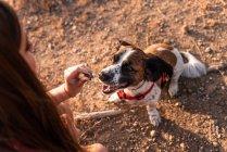 Primo piano della giovane donna con i capelli lunghi che tengono la pace di trattare per il cane carino — Foto stock