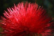 Primer plano de la flor exótica con picos rojos vivos creciendo en el parque tropical - foto de stock