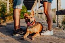 Обрезанный вид ласкового мужчины и женщины, стоящих рядом с расслабляющей игривой коричневой собакой на деревянной террасе — стоковое фото