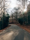 Empty paved roadway among bare autumnal trees in sunny forest — Stock Photo