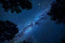 Cielo nocturno con Vía Láctea y silueta de árboles - foto de stock