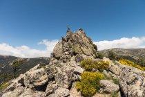 Capre grigie che guardano con curiosità, in piedi su rocce rocciose su sfondo di cielo azzurro brillante — Foto stock