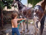 Вид сзади на босоногого мальчика, поливающего жеребца пресной водой на фермерской террасе — стоковое фото