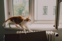 Ginger cat walking at window sill and stretching at home — Stock Photo