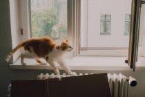 Chat roux marchant au rebord de la fenêtre et s'étirant à la maison — Photo de stock