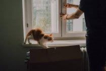 Jengibre gato caminando en ventana alféizar mientras casual hombre cierre ventana en casa - foto de stock