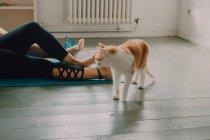 Здоровый рыжий домашний кот прогуливается по полу комнаты рядом с лежащей босой парой — стоковое фото
