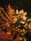 Beautiful fresh blooming medicinal melilotus flowers with yellow petals among green leaves autumn forest — Stock Photo