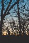 Vue latérale de l'homme en silhouette marchant dans la forêt sombre d'automne avec des arbres nus — Photo de stock