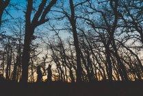 Vue latérale de silhouette méconnaissable personnes marchant dans la forêt sombre d'automne avec des arbres nus — Photo de stock