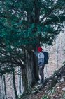 Side view of male backpacker in red cap standing next to massive green pine trees on mountain slope — Stock Photo