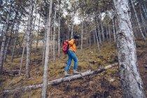 Вид сбоку решительной женщины в теплой одежде с рюкзаком, идущей по бревну в вечно зеленом лесу — стоковое фото