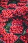 Stand lleno de frambuesas orgánicas maduras en cajas en el mercado de agricultores al aire libre - foto de stock
