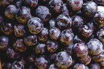 Estancia llena de uvas orgánicas maduras en los agricultores al aire libre mercado. - foto de stock