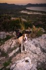 Do acima mencionado grupo de cães adoráveis sentados em solo rochoso áspero à noite na natureza — Fotografia de Stock