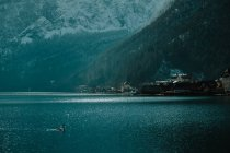 Serene landscape with lonely swan in crystal calm water reflecting sky and snowy mountains in bright daytime in Hallstatt — Stock Photo