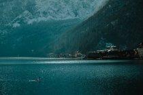 Спокойный пейзаж с одиноким лебедем в кристально спокойной воде, отражающей небо и снежные горы в яркий день в Hallstatt — стоковое фото