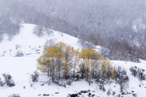 Beech forest covered with snow and ice in a misty landscape in the North of Spain Mountains with trees with autumn foliage — Stock Photo