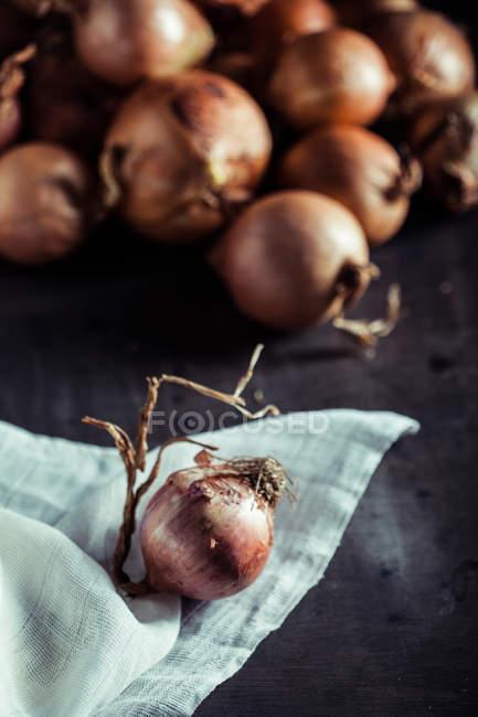 Onion on white cloth — Stock Photo