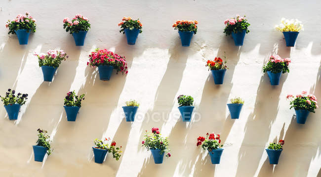 Flowerpots with beautiful flowers on wall — Stock Photo