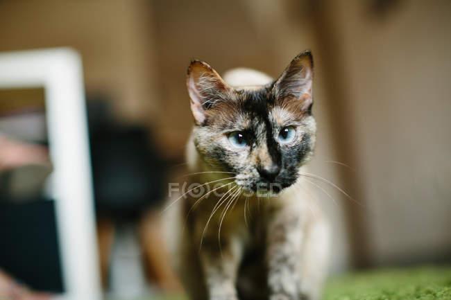 Niedliche Katze steht auf Teppich — Stockfoto