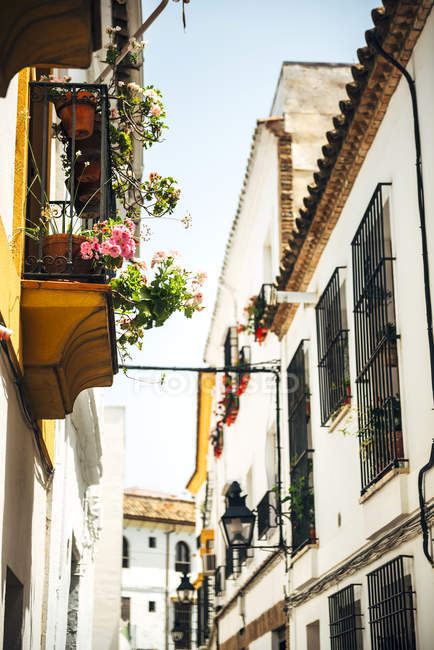 Street of jewish quarter in Cordoba — Stock Photo