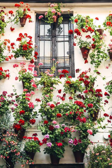 Vasi da fiori con bellissimi fiori sulla parete — Foto stock
