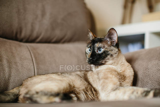 Cute little cat on sofa — Stock Photo