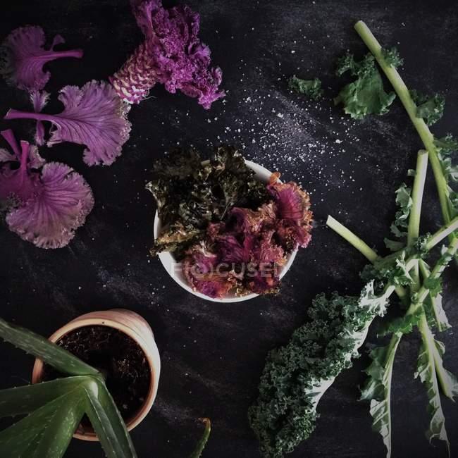 Bunte Salatblätter — Stockfoto