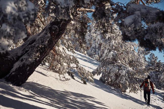 Alpinista na floresta de montanha de neve — Fotografia de Stock