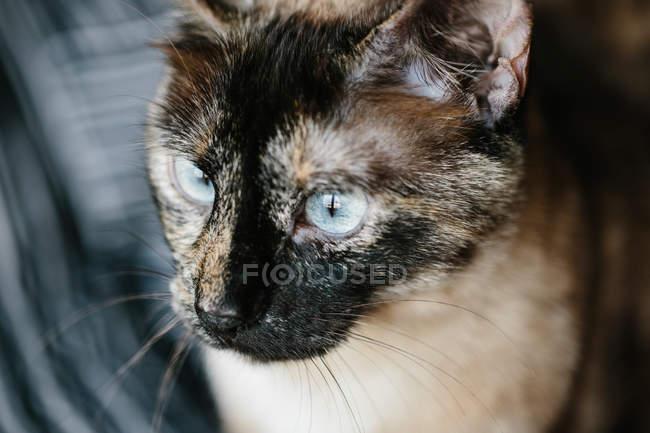 Portrait de chat mignon — Photo de stock