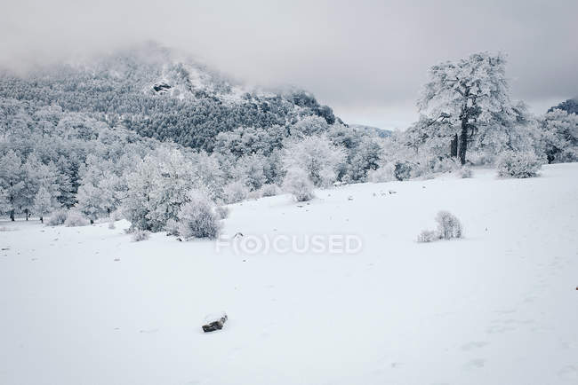 Удивительные зимний пейзаж — стоковое фото
