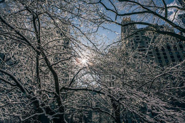 Winter sun through branches — Stock Photo