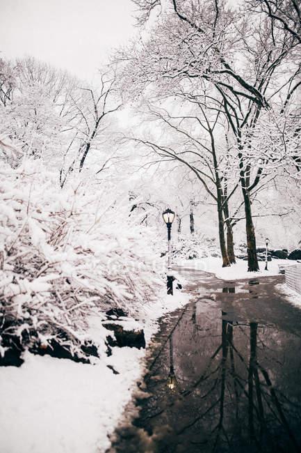 Central park lake at winter — Stock Photo