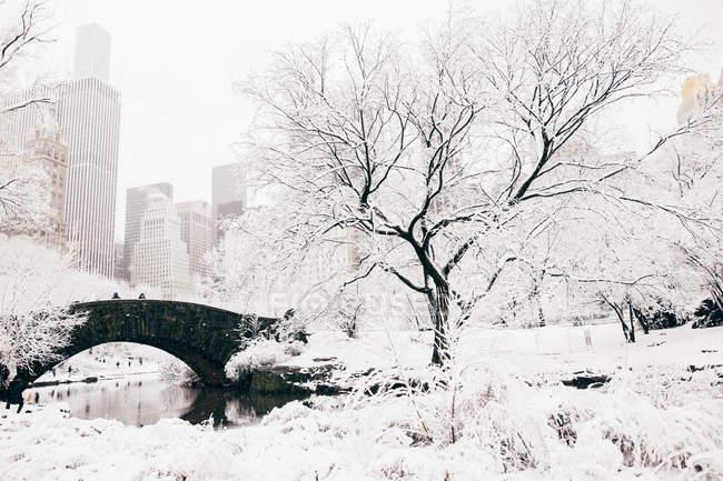 Parque central paisaje de invierno - foto de stock
