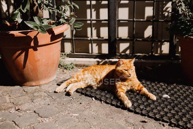 Gato deitado no tapete — Fotografia de Stock
