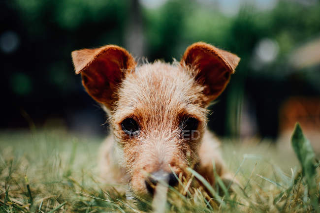 Small dog in grass — Stock Photo