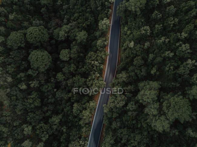 Дорожный лес — стоковое фото