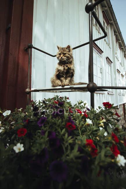 Gato sentado em flores na rua — Fotografia de Stock