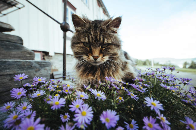 Cat sitting in flowers at street — Stock Photo