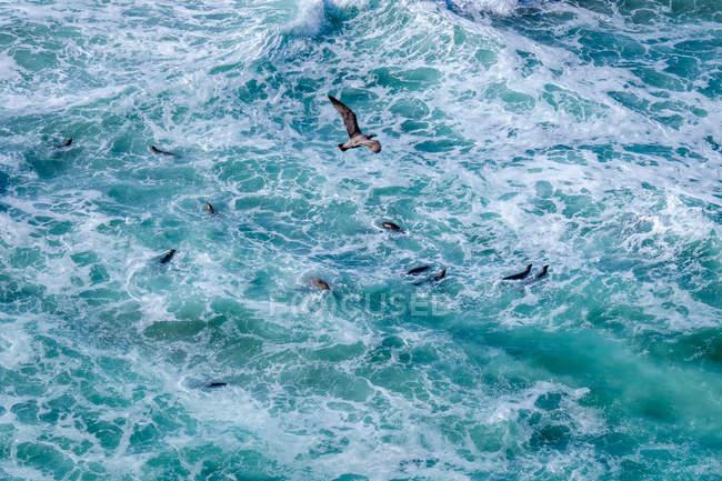 Habitats marinhos de cima — Fotografia de Stock