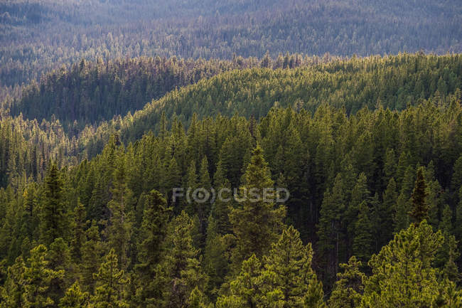 Evergreen forest from above — Stock Photo