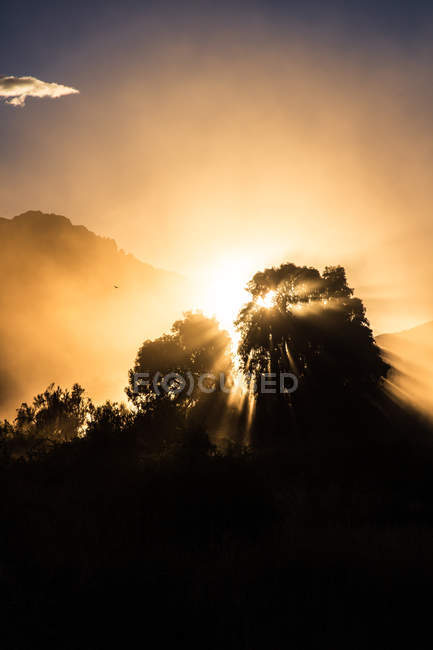 Silhouette of trees in fog and sunlight — Stock Photo