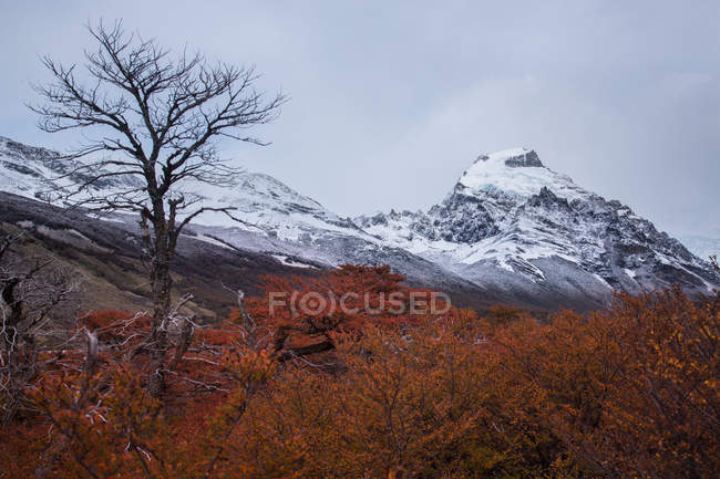 Bare trees on background of mountains — Stock Photo