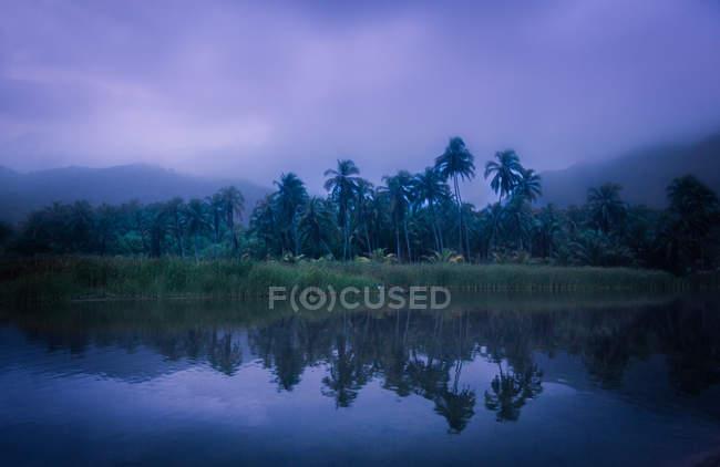 Тропічний березі озера в туман — стокове фото
