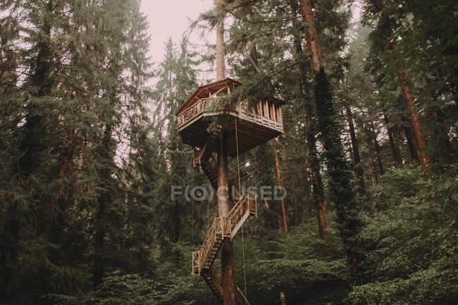 Casa del árbol en luz brillante - foto de stock