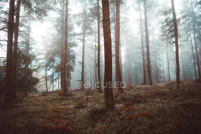 Дорога в туманном лесу — стоковое фото