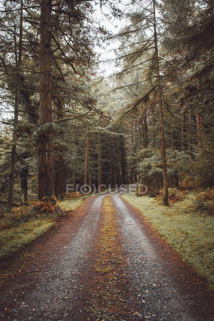 Road running among evergreen trees — Stock Photo